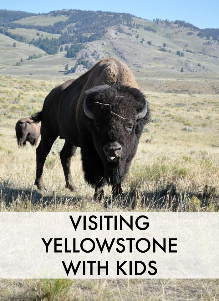 VISITING YELLOWSTONE WITH KIDS